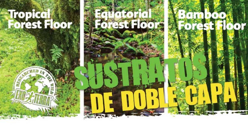 Varios substrato chão da floresta