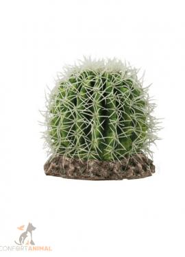 cactus sonora hobby