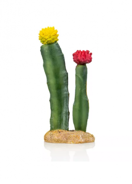 Cactus 6 Giganterra